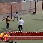 Dog Scores a Goal in Argentina